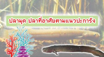 ปลามุด ปลาที่อาศัยตามแนวปะการัง