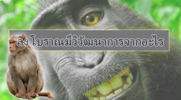 ลิง โบราณมีวิวัฒนาการจากอะไร